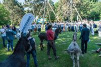 """Aktionswoche """"Wiesbaden Engagiert!"""" 2017 Kick-off-Event Schloß Freudenberg Foto: Annika List"""