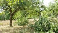 112 C wea 20180821 naturefund betreuungsbehoerde 2