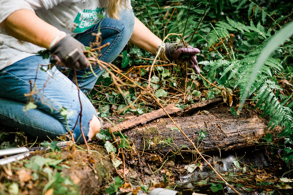 030A wea 2019 cyperus lebensraeume fuer wildtiere 20190611 ug LR 24