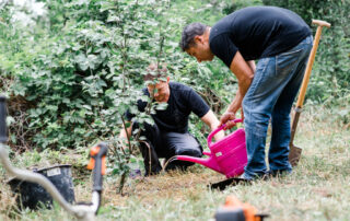 035A wea 2019 cyperus pflanzen pflegen 20190614 ug low 22