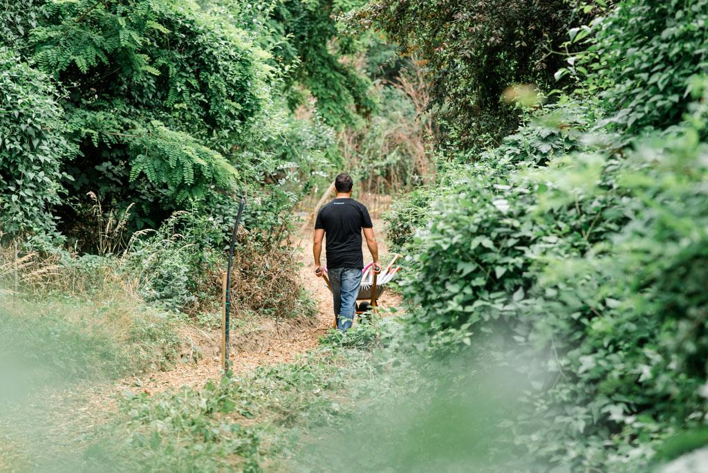 035A wea 2019 cyperus pflanzen pflegen 20190614 ug low 28