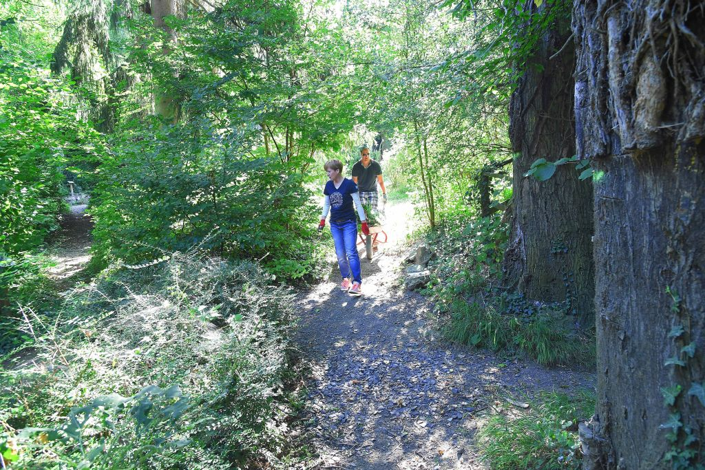 035B wea 2019 Cyperus Pflanzen Pflegen 20190822 KS LR 06