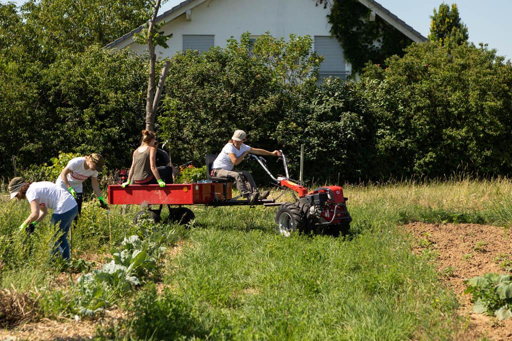 104 wea 2020 naturefund agroforst acker III 20200624 mw lr 15904