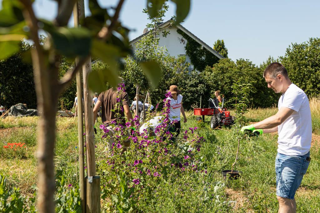 104 wea 2020 naturefund agroforst acker III 20200624 mw lr 15913