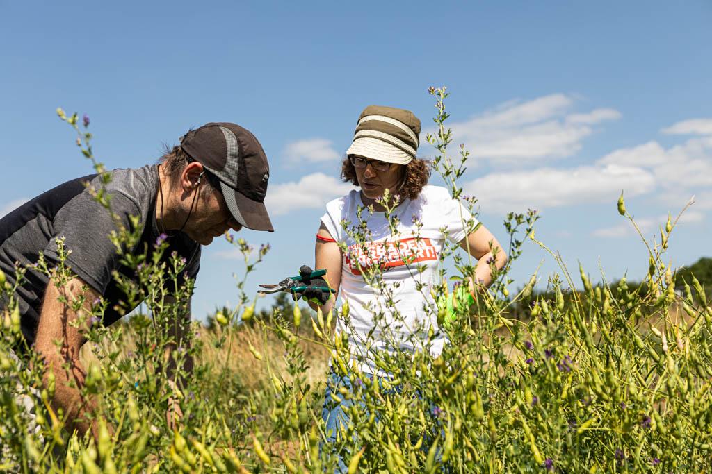 104 wea 2020 naturefund agroforst acker III 20200624 mw lr 15940