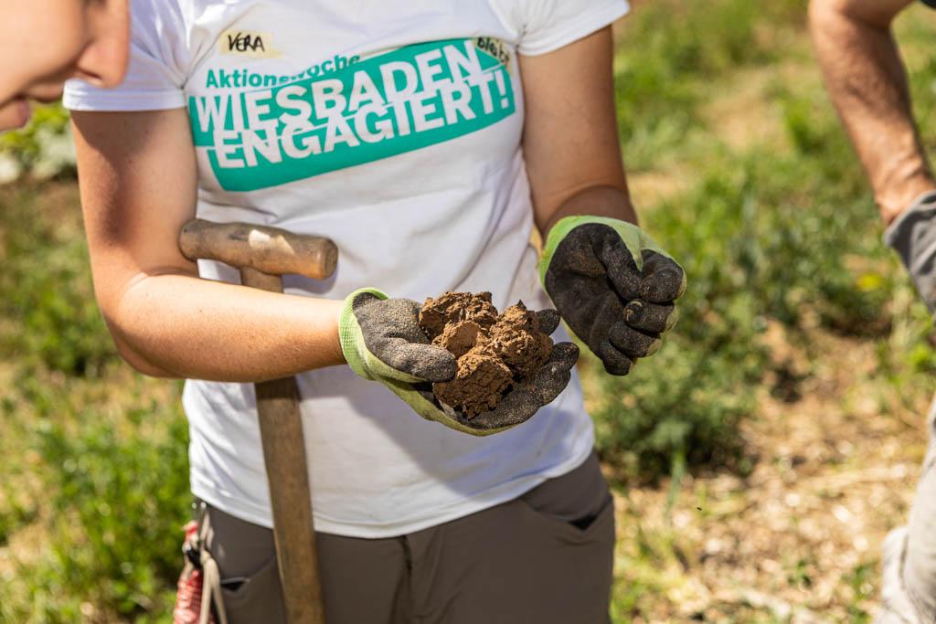 104 wea 2020 naturefund agroforst acker III 20200624 mw lr 15965