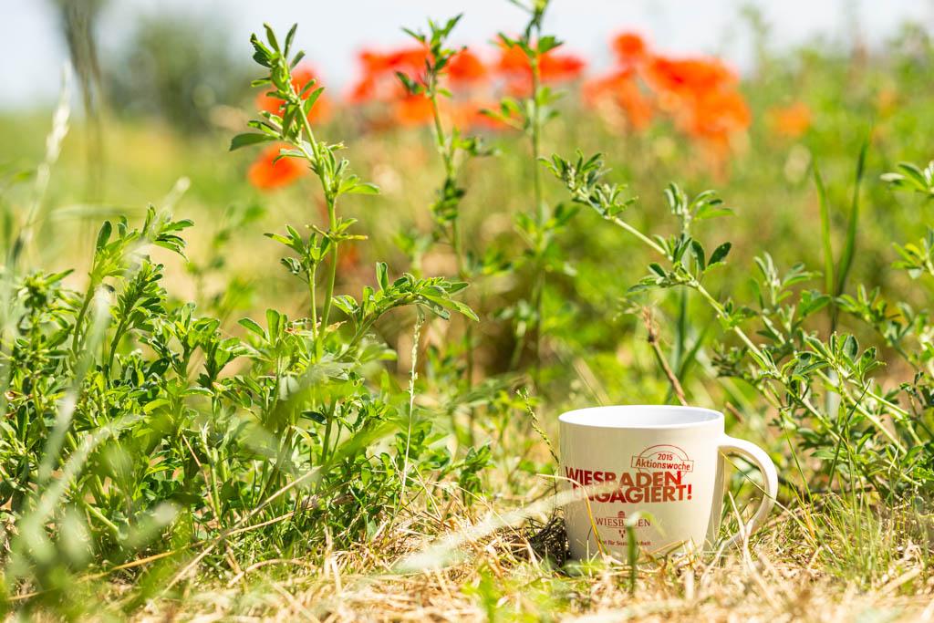104 wea 2020 naturefund agroforst acker III 20200624 mw lr 16007